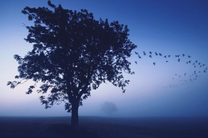 Arbres bleus nature oiseaux brouillard brume 485x728
