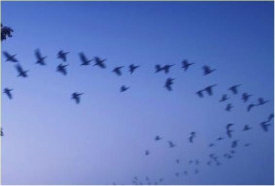 Oiseauxbleus